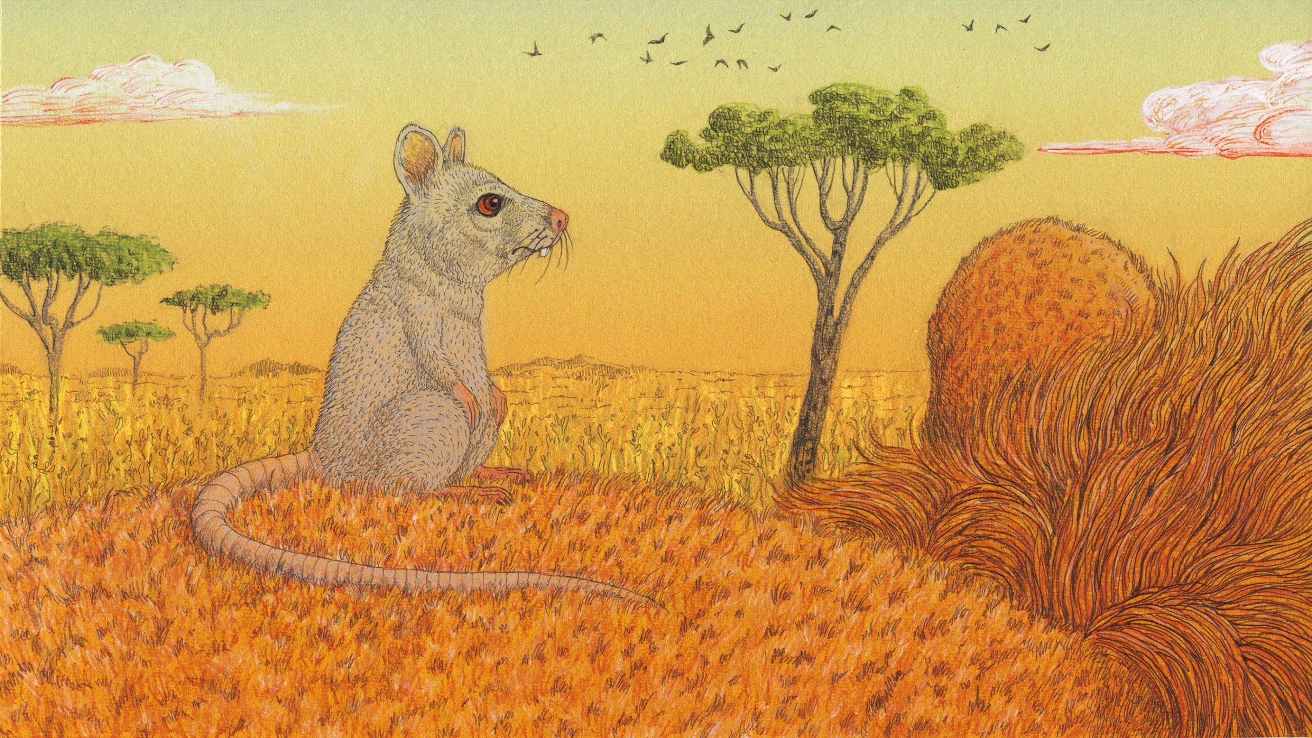 Imagen de El león y el ratón